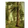 Albert Biersdant California Redwoods Canvas Print