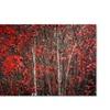 Philippe Sainte-Laudy 'The Hush Before Winter' Canvas Art