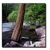 Preston 'Yosemite I' Canvas Art
