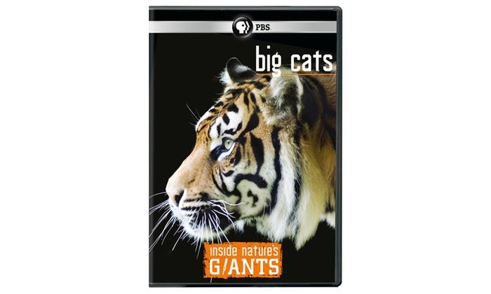 Big Cats Golf Coupons