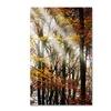 Philippe Sainte-Laudy 'Just the Light' Canvas Art