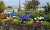 Rock Garden Mixed Flower Bulbs (55pk, 110pk, 220pk)