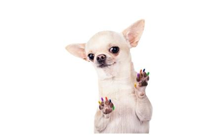 Trim A Dog S Nails Avoiding The Quick