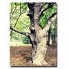 Ariane Moshayedi Tree Canvas Print