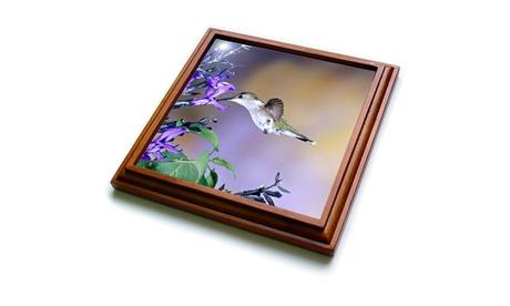 Trivet with TileRubythroated Hummingbird on Black and Blue Salvia Illinois photo