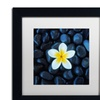 David Evans 'Plumeria & Pebbles 1' Matted Black Framed Art