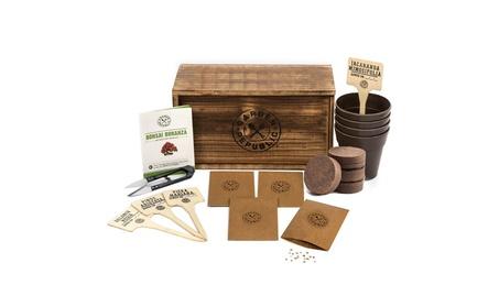 Bonsai Tree Seed Starter Kit - Mini Bonsai Plant Growing Kit 352da9ad-598b-4b16-bb20-a3231c50befd