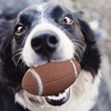 Fetch, Chew, and Play Sports Ball Pet Toy Set (5-Piece)