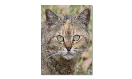 Patty Tuggle 'Pretty Kitty' Canvas Art 91465f50-0c13-4929-ab72-07994e8c37c5
