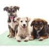 Puppy Pads Pet Training Mat (2-Pack)