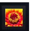 Kurt Shaffer 'Floral Mass Coronal Ejection' Matted Black Framed Art