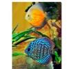 Kurt Shaffer Two Tropical Fish Canvas Print
