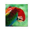 Lois Bryan Colorful Macaw Square Format Canvas Print