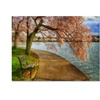 Lois Bryan Meet Me At Our Bench Canvas Print