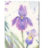 Sheila Golden 'June Iris' Canvas Art