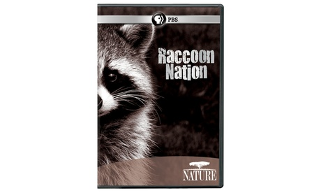 NATURE: Raccoon Nation DVD 59c1b64d-e25a-4111-b32b-a232bf29c92d