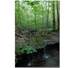 Kurt Shaffer Tiny Forest Falls Canvas Print 16 x 24
