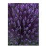 Kurt Shaffer Alien Flower Pods Canvas Print