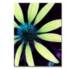 Kathie McCurdy Lime Green Coneflower Canvas Print