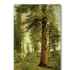 Albert Bierstadt 'California Redwoods' Canvas Art