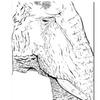 Joe Dragunas Elephant Canvas Print 18 x 24