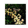 Kurt Shaffer Zebra Longwing Butterfly Canvas Print