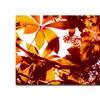Amy Vangsgard, Light Coming Through Tree Leaves Canvas Print