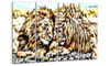 Soul Mates Lion Metal Wall Art 48x28 4 Panels