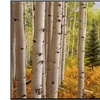 Aspen Forest by William Manning