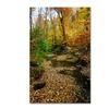 Kurt Shaffer 'Autumn Stream' Canvas Art