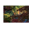 Kurt Shaffer 'Multi Colored Maples' Canvas Art