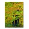 Kathie McCurdy Forest Beauty Canvas Print