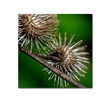 Lois Bryan Prickly Square Format Canvas Print