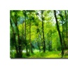 Lois Bryan Forest Walk in Spring Canvas Print