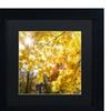 Kurt Shaffer 'Sunny Happy Autumn Day' Matted Black Framed Art