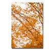 Ariane Moshayedi Michigan Orange Canvas Print