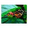Kurt Shaffer Cream Spotted Tigerwing Canvas Print