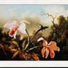 Orchids and Hummingbirds by Martin Johnson Heade