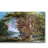 Paul Sandby An Ancient Beech Tree 1794 Canvas Print