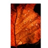 Philippe Sainte-Laudy 'Autumn Droplets' Canvas Art