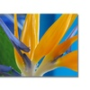 Kathie McCurdy Bird of Paradise Canvas Print