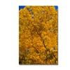 CATeyes 'Golden Trees' Canvas Art