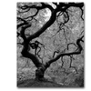 David Farley Japanese Tree II Canvas Print