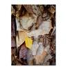 Kurt Shaffer Paper Birch Abstract Canvas Print