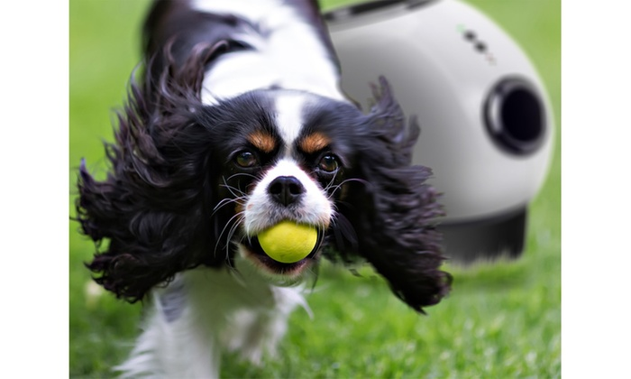 Automatic Dog Ball Launcher Throw N