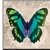 Butterflies II by Tandi Venter
