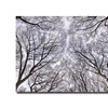 Ariane Moshayedi Look Up Canvas Print