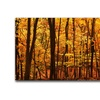 CATeyes Delicious Autumn Canvas Print