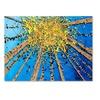 Roderick Stevens Brown Aspen Sky Canvas Print