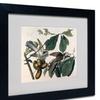 John James Audubon 'Yellow-Billed Cuckoo' Matted Black Framed Art